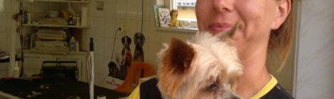 Bejelentkezés a kutyakozmetikába