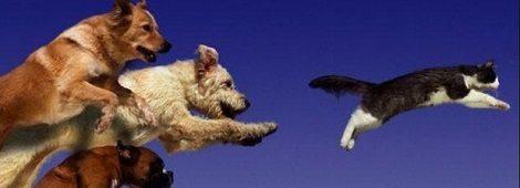 9 tipp a gondtalan kutyasétához, játékhoz