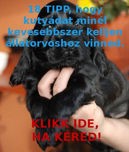 kutyaegeszseg
