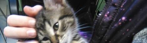 cica különleges