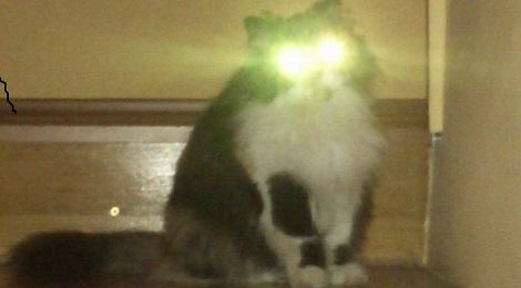 UFO macska